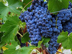 絶品ワインと美しい田園風景を求めて 世界のワイナリーを巡る旅