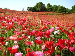 【関東近郊】東京から日帰りで行ける!絶景の花畑スポット13選 【最新版】