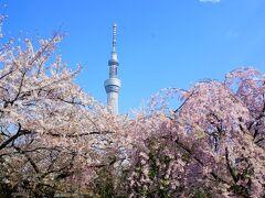 2021年最新版「東京にある桜・花見の名所15選」定番、絶景など